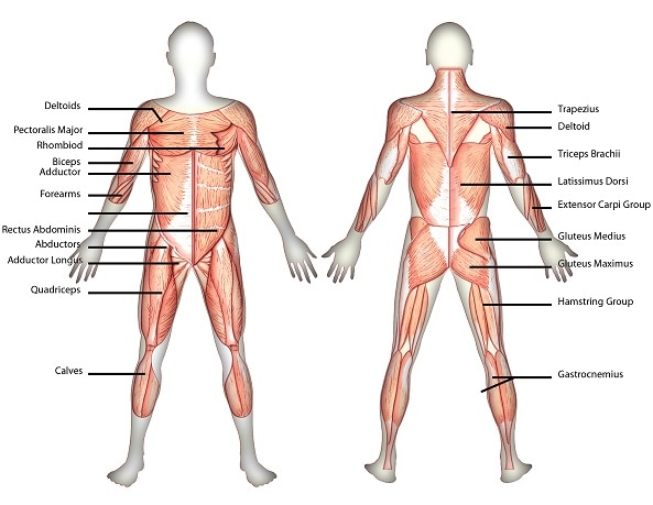 muscle strain (muscle pain)