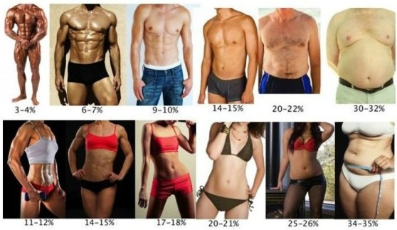 body fat percentage for men and women
